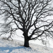One Tree in Winter — Stock Photo