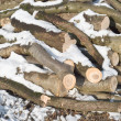 Cut Winter Lumber for Heating — Stock Photo