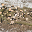 Stock Photo: Cut Winter Lumber for Heating