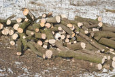 Cut Winter Lumber for Heating — 图库照片