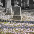 Graveyard in Spring — Stock Photo