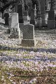 Bahar mezarlıkta — Stok fotoğraf