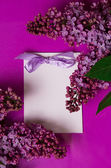 Greeting card with lilac flowers — Stock Photo