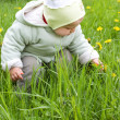 Baby girl and dandelions — Stok fotoğraf