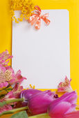 Decorative card with mimosa and tulips — Stock Photo