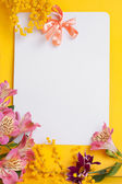 Decorative card with mimosa — Stock Photo
