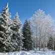 Winter park in snow — Stock Photo #8122121