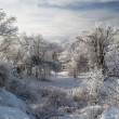 Winter park in snow — Stock Photo #8122154