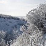 Winter park in snow — Stock Photo #8122163