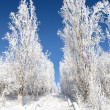 Winter frosty Park — Stock Photo