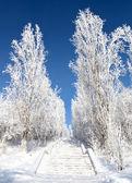 Winter frosty Park — Stock Photo