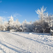 Winter park in snow — Stock Photo #8496635