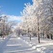 Winter park in snow — Stock Photo #8496638