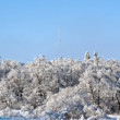 Image of snow-covered trees on wonderful winter day - 图库照片