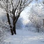 Winter park in snow — Stock Photo #8607406