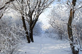 Winter park in snow — Stockfoto