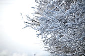 Snow abstract branches over sky background — Stock Photo