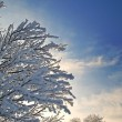 Stock Photo: Snow abstract branches over sky background
