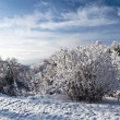 Winter park in snow — Stock Photo #8636481