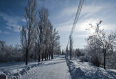 Snow-covered road in winter park — Stock Photo