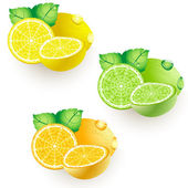 Lemon lime orange — Vector de stock