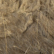 Hay - dried — Stock Photo