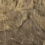 Hay - dried — Stock Photo