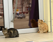Cats in line at a beauty salon. — Stock Photo