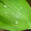 Leaf with drops of water — Stock Photo