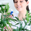 Stock Photo: Womtending and cultivating flowers