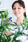 Woman tending and cultivating flowers — Stock Photo