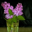 Lilac flowers on a dark background — Stock Photo