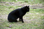 Black Cat, as soon as the road goes — Stock Photo
