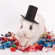 Rabbit in a hat — Stock Photo #8703830