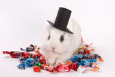 Rabbit in a hat — Stockfoto