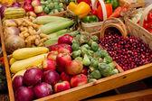 Vegetales de la cosecha de otoño — Foto de Stock