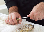 Shucking an oyster — Stock Photo