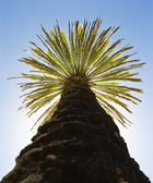 Palm against the blue sky — Stock Photo