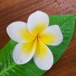 Frangipani Spa Flower — Stock Photo #9212413