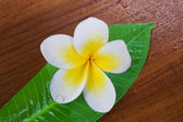 Frangipani Spa Flower — Stock Photo