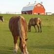 Horses and a barn vertical — Foto de Stock