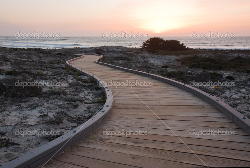 A walkway over sand dunes towards the ocean at Asilomar State Park near Pacific Grove, California, with with the setting sun and Monterey cypress trees (Cupressus macrocarpa) in the background. Monterey cypress is endemic to the central coast of CA  Stock Photo #9447848