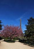 Primavera em paris — Fotografia Stock
