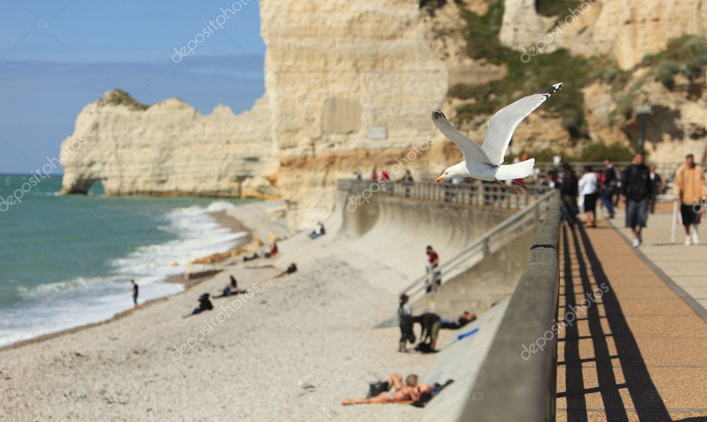 A gull flying over the beach on La Falaise de Amont in Etretat on the Upper Normandy coast in the North of France. — Stock Photo #9176618