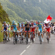 The Peloton - Foto Stock