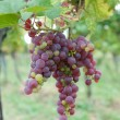 Red grapes — Stock Photo #9797133