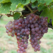 Red grapes — Stock Photo #9797165