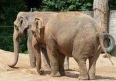 Elefante tomando banho — Foto Stock