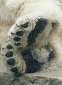 A polar bears paws — Foto Stock