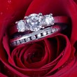 Wedding Ring in Rose, Will you marry me? — Stock Photo #9006765